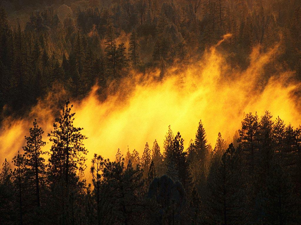 Информация о пожарной опасности